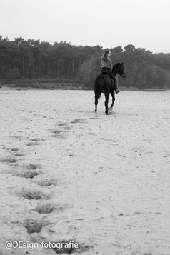 paard Lommel-2.JPG