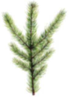 Pines_04.jpg