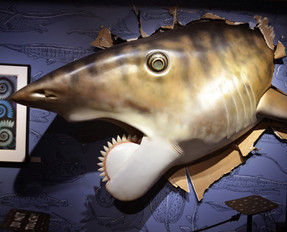 Helicoprion (Whorltooth Shark)