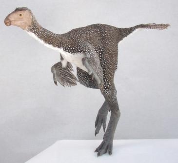 Causipteryx