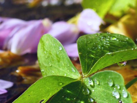 Élixirs floraux pour libérer les raideurs de l'âme et du corps, Voies de guérison