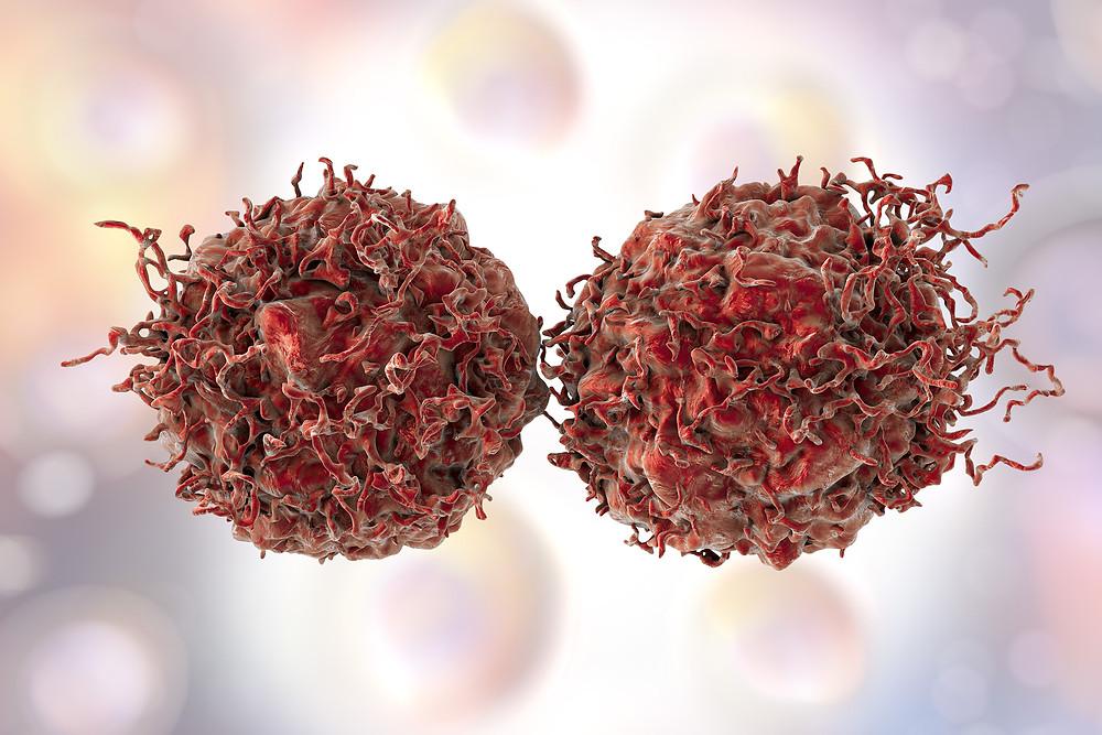 Prostate cells - illustration