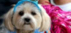 MMD Pet Parade 2.jpg