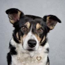 Grumpy Dog Kirkintilloch