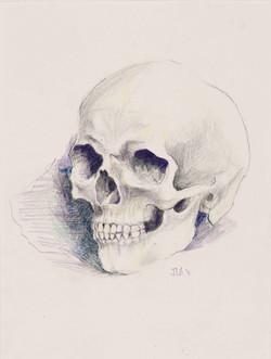Ahern_Skull1.jpg