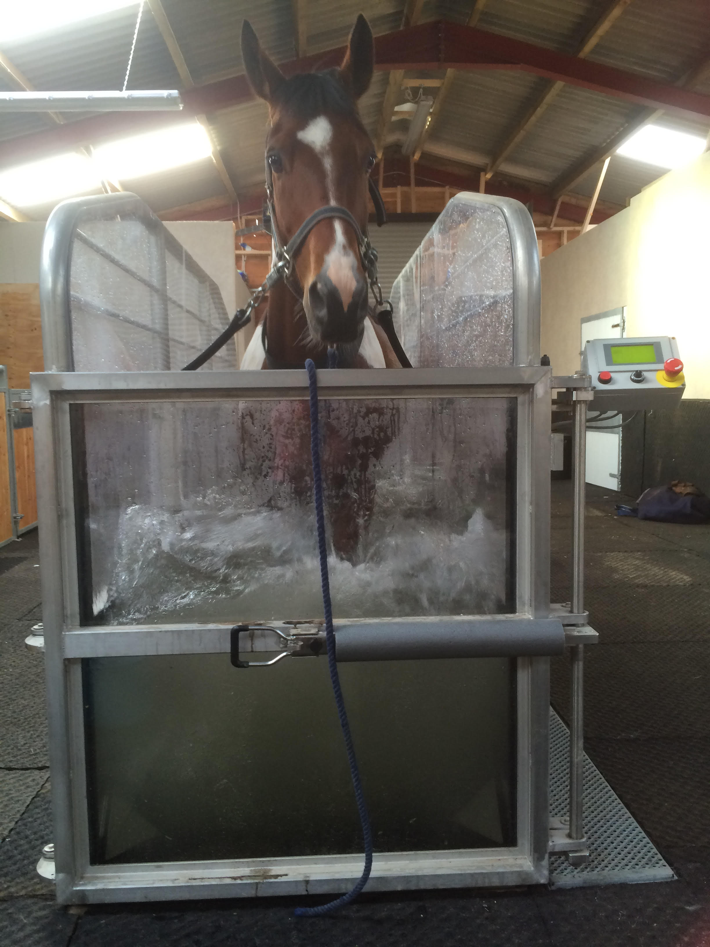 Treadmill horse 1