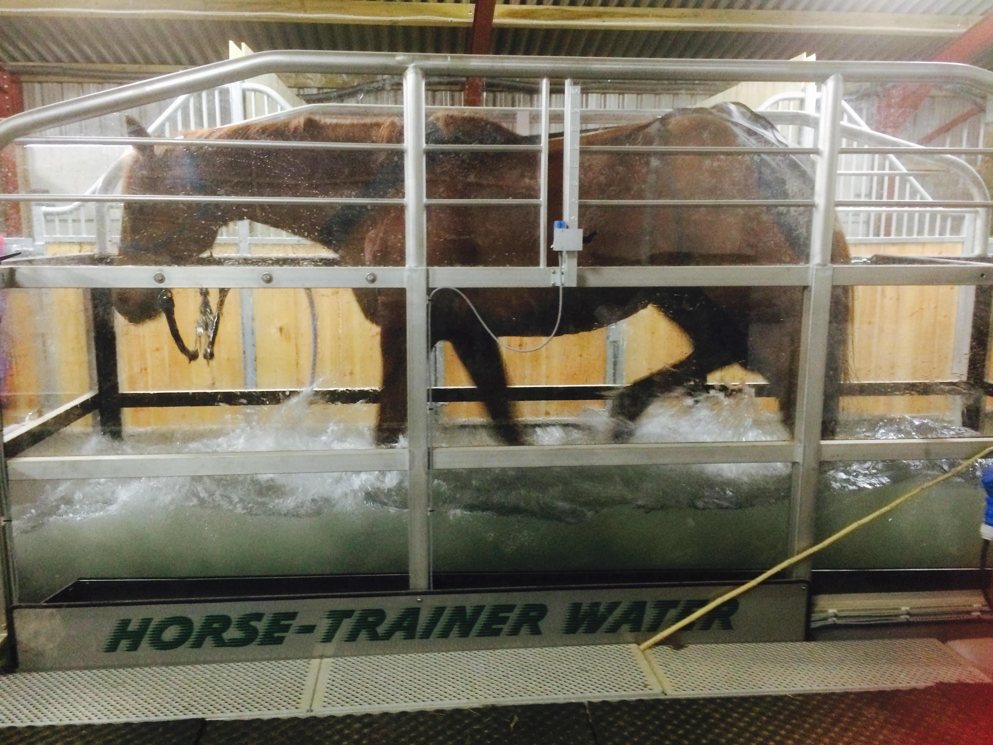 treadmill horse 2