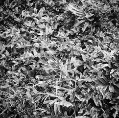 17. 17 JAN 2021: Overgrown