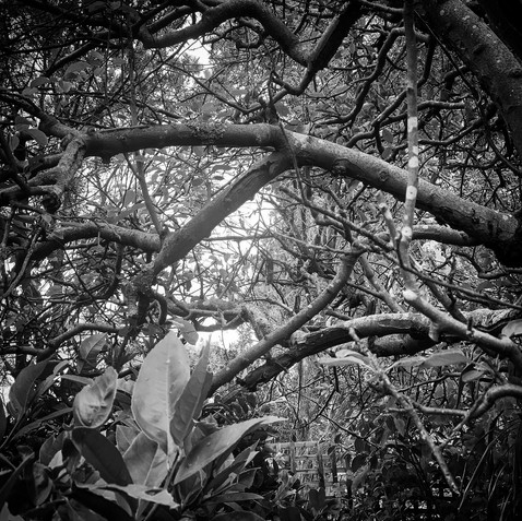 18. 18 JAN 2021: Through trees