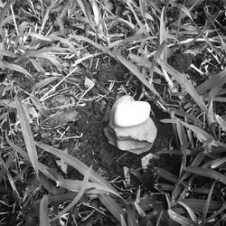 10. 10 JAN 17-RIP little fishy_insta.jpg