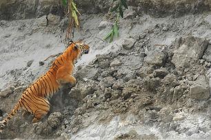 Tiger Spotting in Kaziranga.JPG