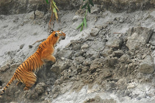 Tiger Spotting in Kaziranga.JPG