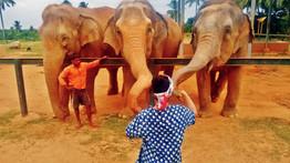 elephant_orphanage1.jpg