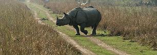 Assam Rhinos.jpg