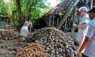 Coconut Peeling