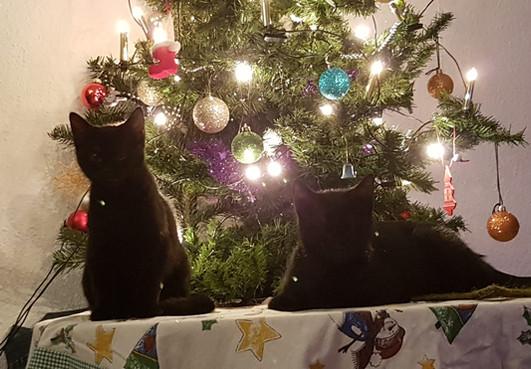 Weihnachtsbäume sind was tolles