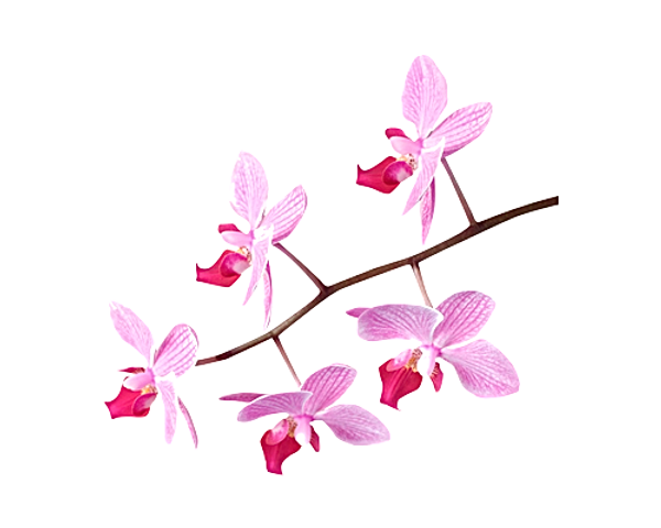 flores1.png