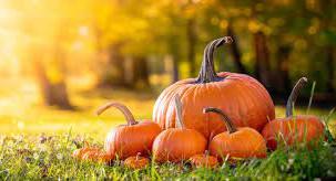 Free Pumpkins & Apples from Dowd Farm