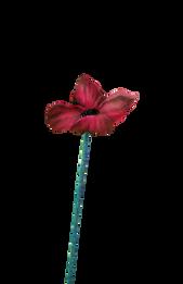 poppy 2.png