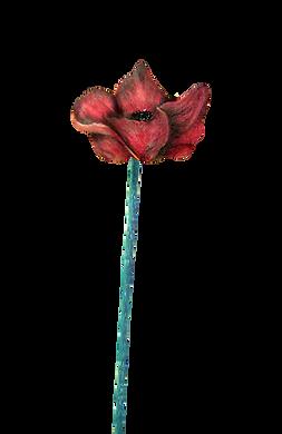 poppy 1.png