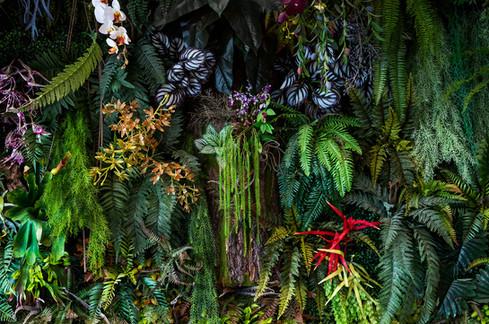 jungle stock small.jpg