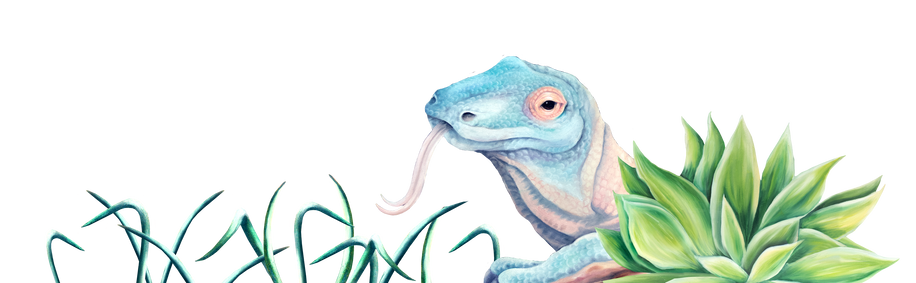 deco home page dragon .png