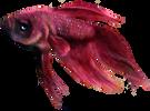 fishy .png
