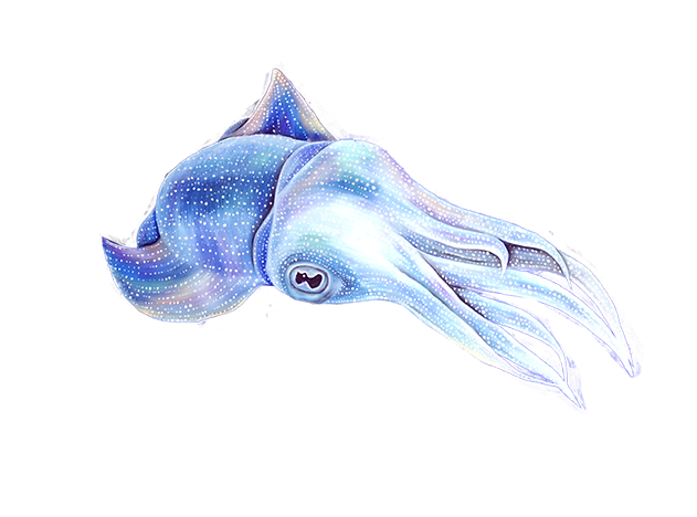 cuttlefish.png