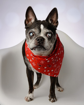 Dog Photography in Evansville, IN