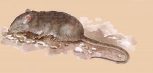 RMD- Avoiding the Plague