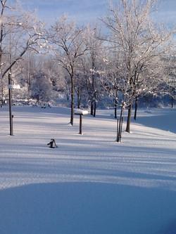 winter1_edited.JPG