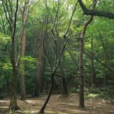 ashigawa_hike-09.png