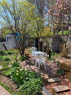 早春の庭.JPG