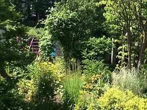 夏の庭.JPG