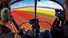 TV Report Tulip fields, Noordoostpolder, the Netherlands