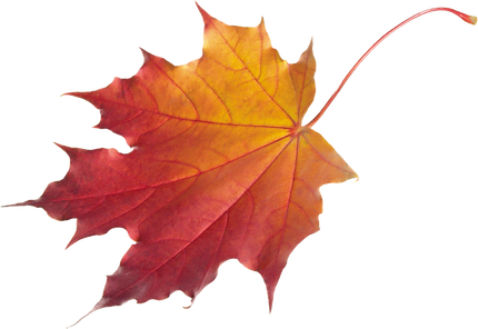 autumn-leaves-hd-png--3101.png