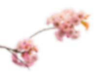 blossom.png