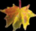 purepng.com-autumn-leavesautumnleavespla