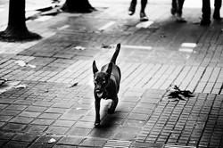 Street_0011