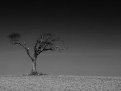 popular-landscaping-landscape-photography-fine-art-prints-fine-art-landscape-photography-black-and-w