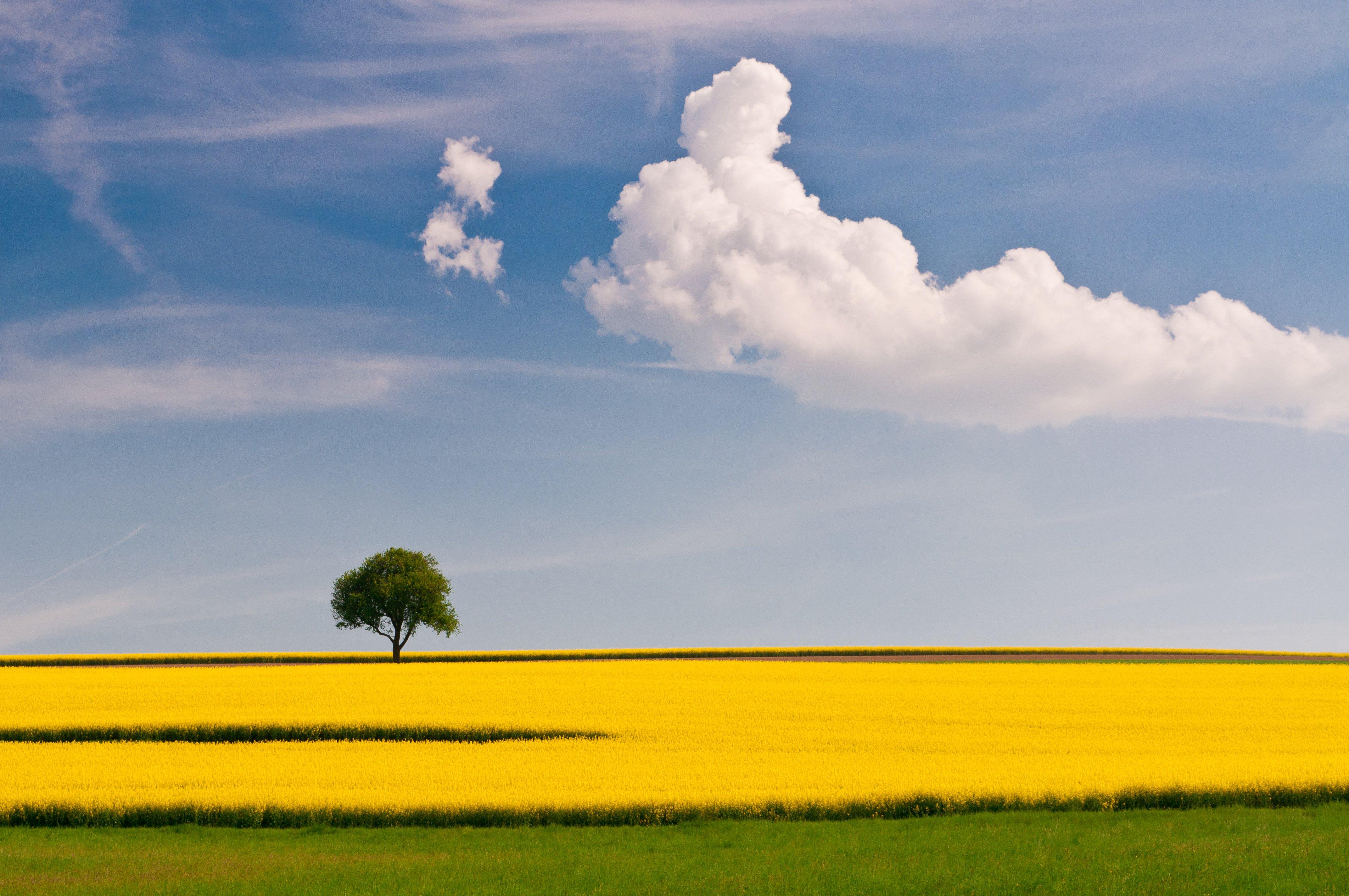 rural_001