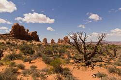 Desert_002