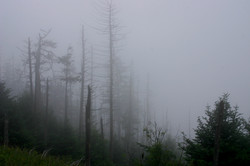 Smothered in Mist