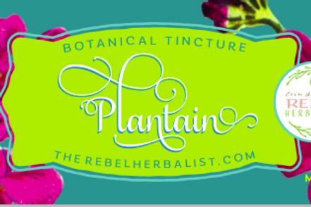 Plantain Tincture