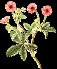 floral-botanicals(2)-34.png
