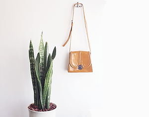 Purse on wall with cactus