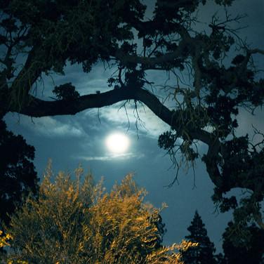 April Moon.jpg