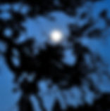 Moon at Twilight4.jpg