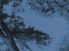 Wind%20New%20Tree4_edited.jpg