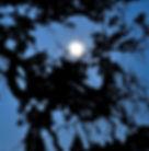 Moon at Twilight4_edited.jpg